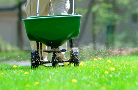 fertilizers and lawn care
